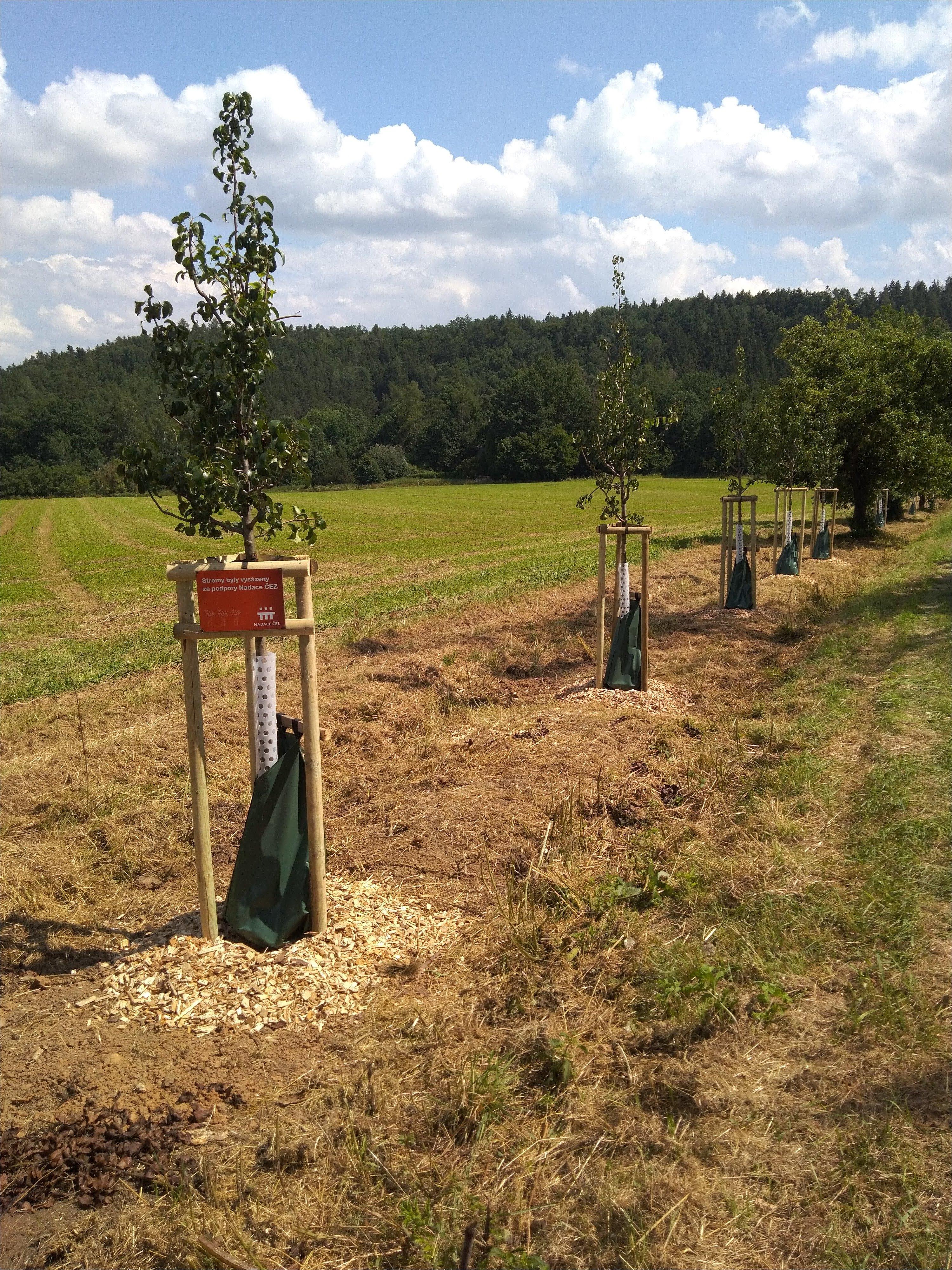 vysazené stromy podél cesty